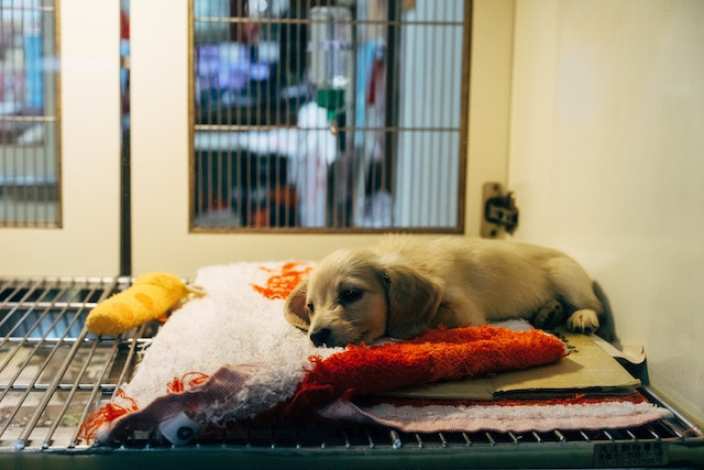Does your dog need a veterinary diet?