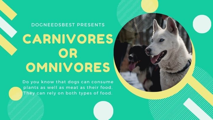 Are Dogs Carnivores or Omnivores Featured Image