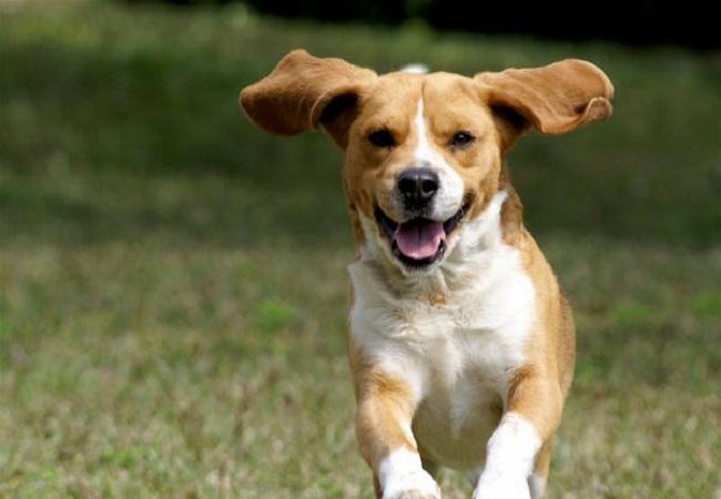 Are Dogs Carnivores or Omnivores