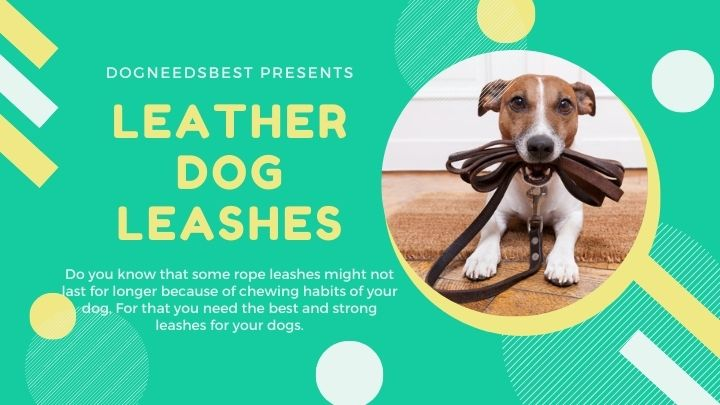 Best Leather Dog Leashes Featured Image