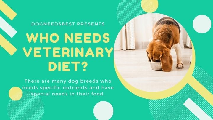 Does Your Dog Need A Veterinary Diet Featured Image