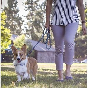 Friends Forever Dog Slip Rope Leash