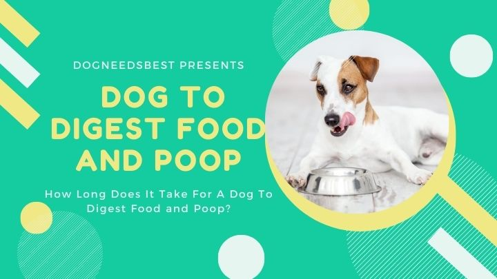 How Long Does It Take For A Dog To Digest Food and Poop Featured Image
