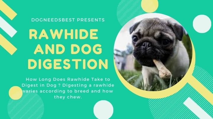 How Long Does Rawhide Take to Digest in Dog Featured Image