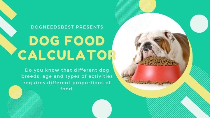 How Many Cups in a Pound of Dog Food Featured Image