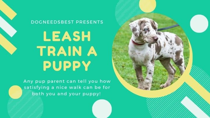 How to Teach a Puppy to Walk on a Leash Featured Image