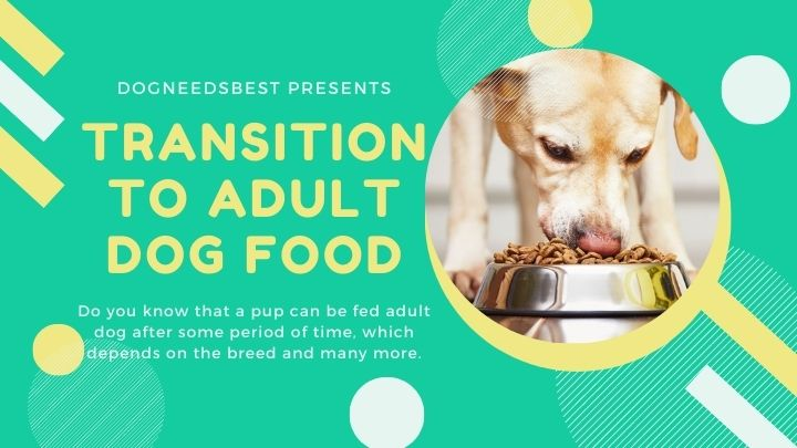Is Your Puppy Ready for Adult Dog Food Featured Image