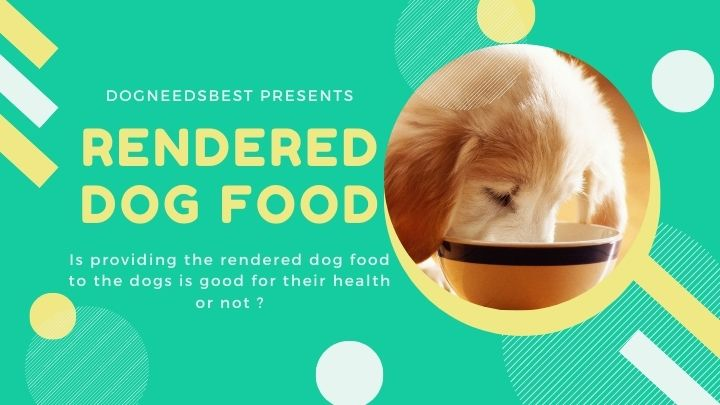 The Shocking Truth About Rendered Ingredients In Dog Food Featured Image