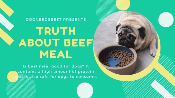 The Truth About Beef Meal in Dog Food Featured Image