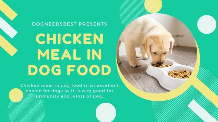 The Truth About Chicken Meal in Dog Food Featured Image