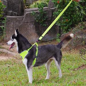 ThinkPet Adjustable Dog Leash