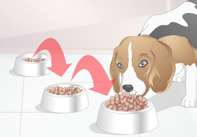 Transition Puppy to Adult Dog Food