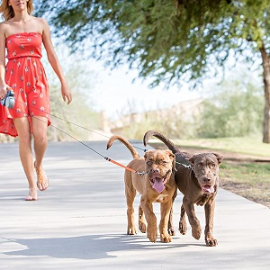 WIGZI Two Dog Reflective Retractable Pet Leashes