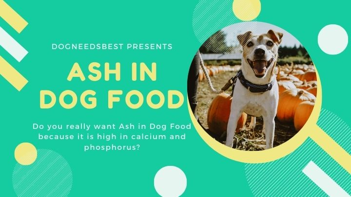 What is Ash in Dog Food & Its Importance Featured Image