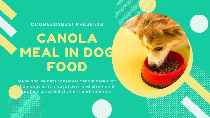 What is Canola Meal in Dog Food Featured Image