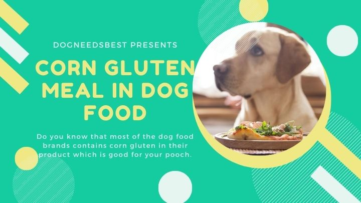 What is Corn Gluten Meal In Dog Food Featured Image