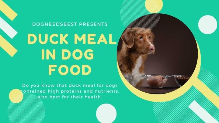 What is Duck Meal in Dog Food Featured Image