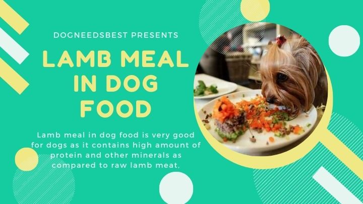 What is Lamb Meal In Dog Food Featured Image