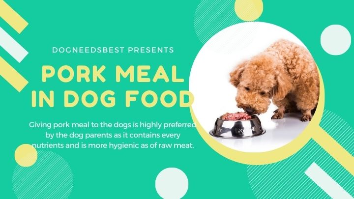 What is Pork Meal In Dog Food Featured Image