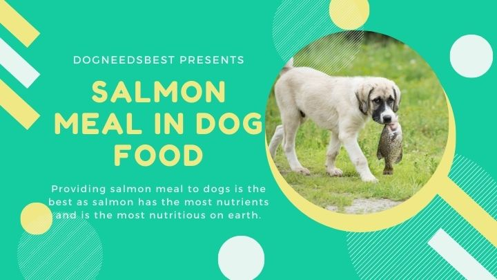 What is Salmon Meal in Dog Food Featured Image