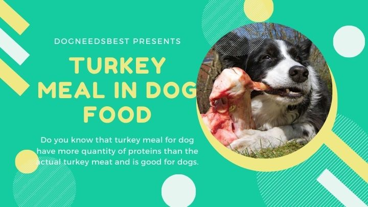 What is Turkey Meal in Dog Food Featured Image