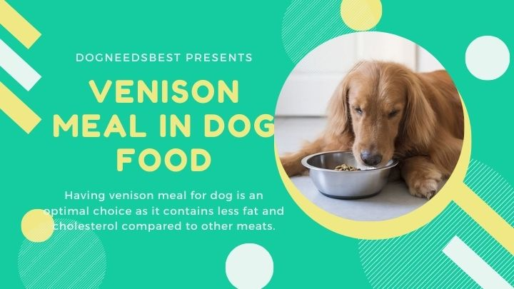What is Venison Meal In Dog Food Featured Image
