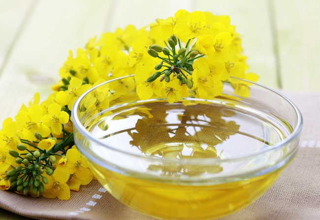 Canola oil in dog food