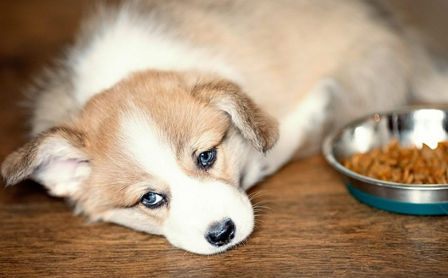 How Long Does It Take For A Dog To Digest Food and Poop?