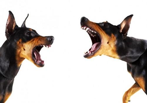 ways to break a dog fight