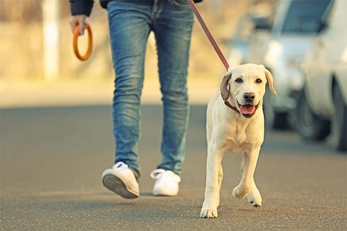 What do you do if an off-leash dog approaches you while you are walking a dog