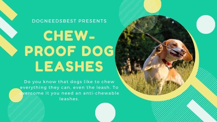 Best Chew-Proof Dog Leashes That Can't Be Chewed Featured Image