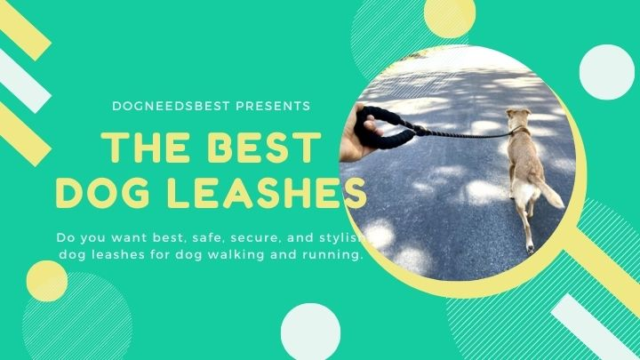 Best Dog Leashes For Your Furry Friend Featured Image
