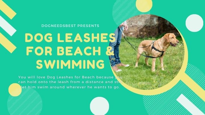Best Dog Leashes for Beach & Swimming Featured Image