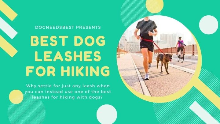 Best Dog Leashes for Hiking Featured Image