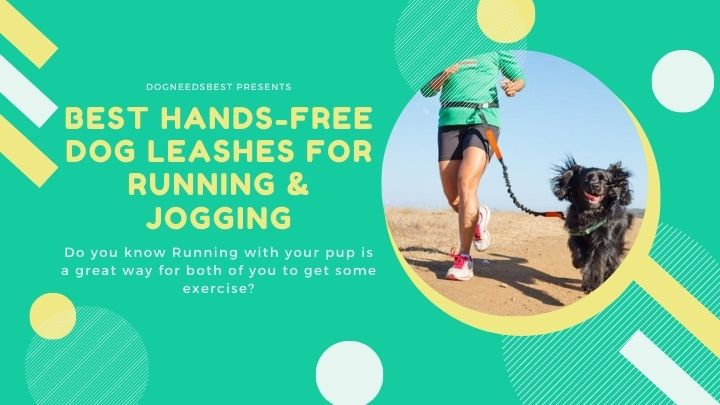 Best Hands-Free Dog Leashes For Running & Jogging Featured Image