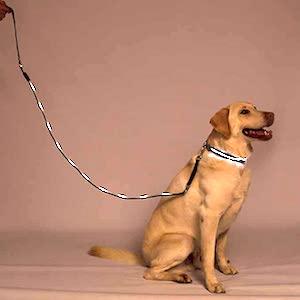 Best LED Dog Leash