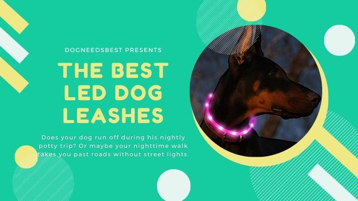 Best LED Dog Leashes Featured Image