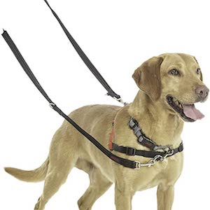 Best Leash for Dogs That Pull