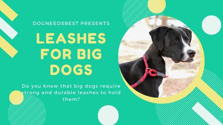 Best Leashes for Big Dogs Featured Image