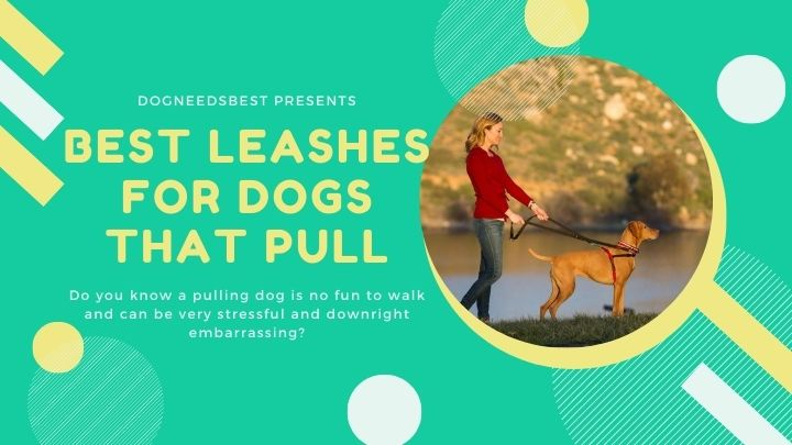 Best Leashes for Dogs that Pull Featured Image
