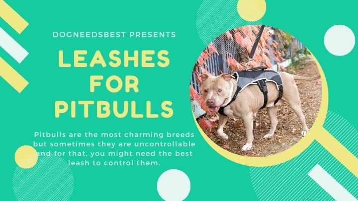 Best Leashes for Pitbulls Featured Image