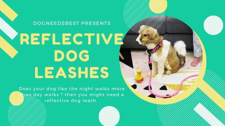 Best Reflective Dog Leashes Featured Image