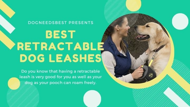 Best Retractable Dog Leashes Featured Image