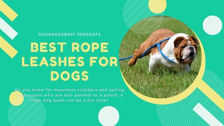 Best Rope Leashes for Safe Walks With Your Dog Featured Image