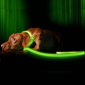 Illumiseen LED Dog Leash