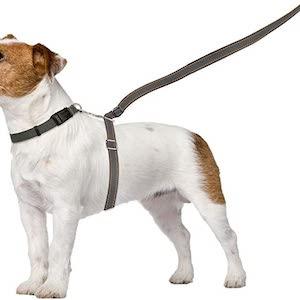 ThunderLeash No-Pull Dog Leash