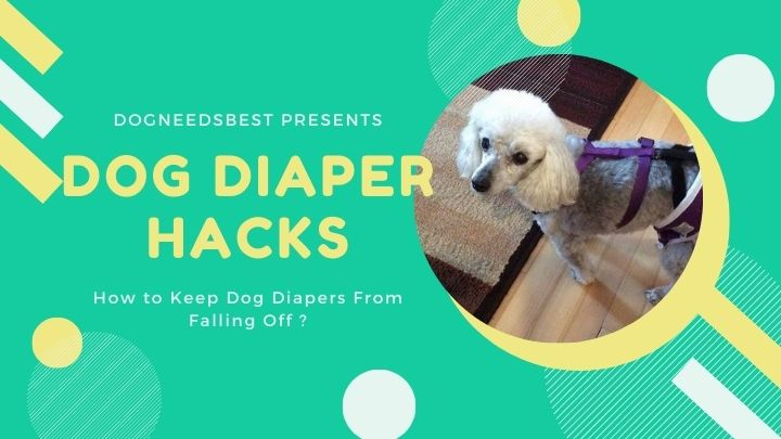 How to Keep Dog Diapers From Falling Off Featured Image