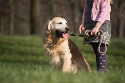 Accordion Grip to Hold your Dog Properly