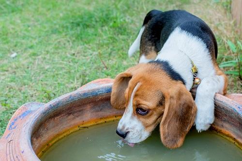 Algae dog water bowl