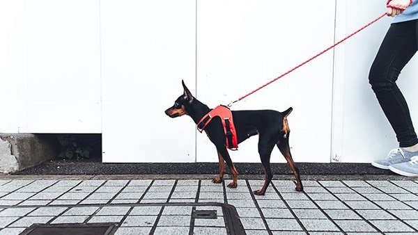 Basic tactics to avoid leash pulling in dogs